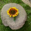 Stock Video: Put sunflower, wheat ears and corn cobs on old millstone
