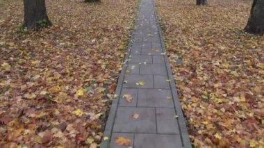 Walking in autumn park on pavement — Stock Video