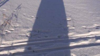 Lago de invierno con nieve paisaje y árbol de sombra — Vídeo de Stock