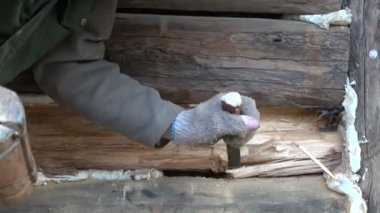 Old house wooden wall renovation works — Stock Video