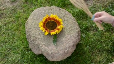 Put sunflower, wheat ears and corn cobs on old millstone — Stock Video