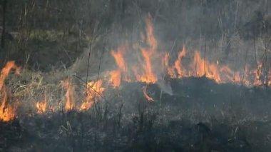 сухая трава опасность пожара вблизи леса — Стоковое видео
