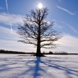 Old and lonely oak tree on snow field — Stock Photo