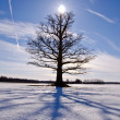 Old and lonely oak tree on snow field — Stockfoto