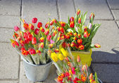 Tulip flowers in street market — Stock Photo