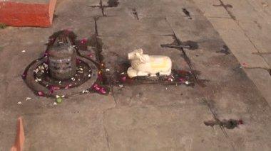 Small sacred cow sculpture in Varanasi hindu temple, India — Stock Video