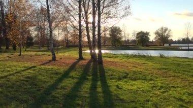 Autumn park landscape and sunlight — Stock Video