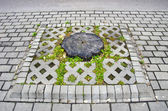 Tree stump on street pavement — Stock Photo