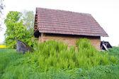 Alte ton-scheune in farm und frühjahr farne — Stockfoto