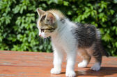 Small beautiful kitten on table in garden — Stockfoto