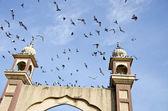 Vuelan las palomas y amritsar parque puerta torres — Foto de Stock