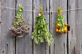 Three medical herbs bunch on old wooden wall — Стоковое фото