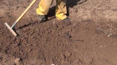 Rake flower bed soil in  spring garden — Stock Video