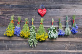 Various medical herbs on old wooden farm wall — Stock Photo