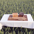 Brown and white bread on table on summer wheat field — Stock Photo