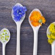 Stock Photo: Various fresh medical herbs bloosoms in wooden spoons