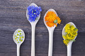 Various fresh medical herbs bloosoms in wooden spoons — Stock Photo