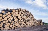 Cut tree logs stack on field — Stock Photo