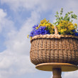 Stock Photo: Wicker basket on table with midsummer medical herb flowers