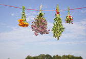 Four medical herb flowers bunch on string — Stock Photo