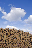 Industrial timber pile log stack and sky — Stock Photo