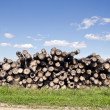Stock Photo: Old log stack on field