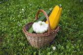 Färsk zucchini i rotting korg på gräs — Stockfoto
