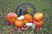Vegetables and fruits harvest on autumn farm yard — Stock Photo