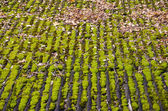 Old farm barn roof with moss background — Stock Photo