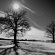 Two oaks on winter field — Stock Photo