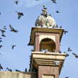 Historical tower with pigeons in Amritsar,India — Stock Photo