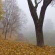 Beautiful autumn park landscape with leaves and fog — Stock Photo