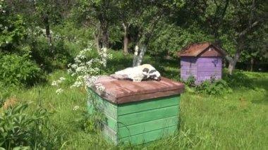 Horse cranium on old beehive roof in summer garden — Stock Video