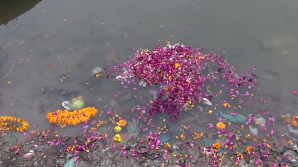 Flowers after ritual in dirty Ganges river water, Varanasi,India — Vidéo