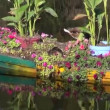 Boat with flowers and ducks on river — Stock Video #35747035