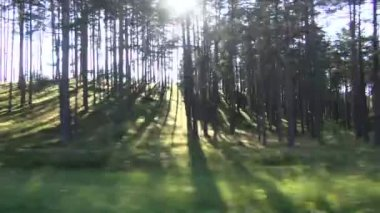 Waldlandschaft in bewegung vom autofenster — Stockvideo