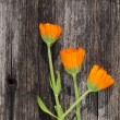 Stock Photo: Three calendulmarigold flowers on old wooden plank