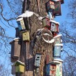 Various colorful bird nest boxes houses hang on old  tree trunk in park — Stock Photo
