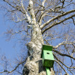 Old bird nesting box on birch tree in spring — Stok fotoğraf