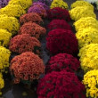 Colorful flowers in autumn market — Stock Video