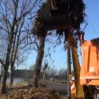 Stock Video: Industrial excavator loading soil and roots into dumper truck