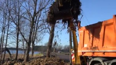 Industrial excavator loading soil and roots into dumper truck — Stock Video