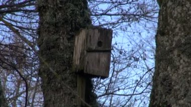 Old wooden birds neste-box birdhouse in park — Stock Video