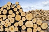 Fresh cut tree logs on field — Stock Photo