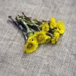Stock Photo: Colts foot Tussilago farfarmedical herb on linen cloth