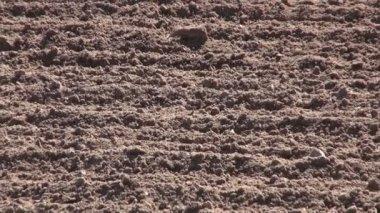 Autumn  farm field soil after cultivation — Stock Video