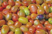 Tomato vegetable background — Stock Photo