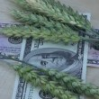 Agriculture business concept. rotate wheat ears and dollars — Stock Video #49907155