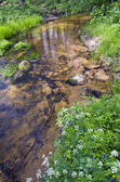 clean summer  river in nature reserve forest — Stock Photo