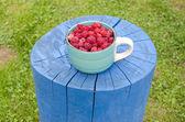 陶瓷杯新鲜树莓 — 图库照片